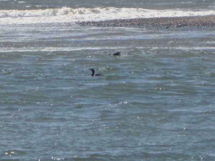 Crissey_birds_in_water053609.JPG