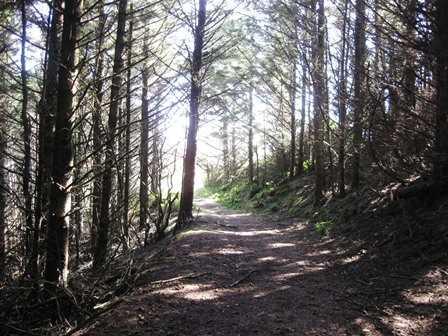 Trail_at_Cape_Blanco_State_Park082234.JPG