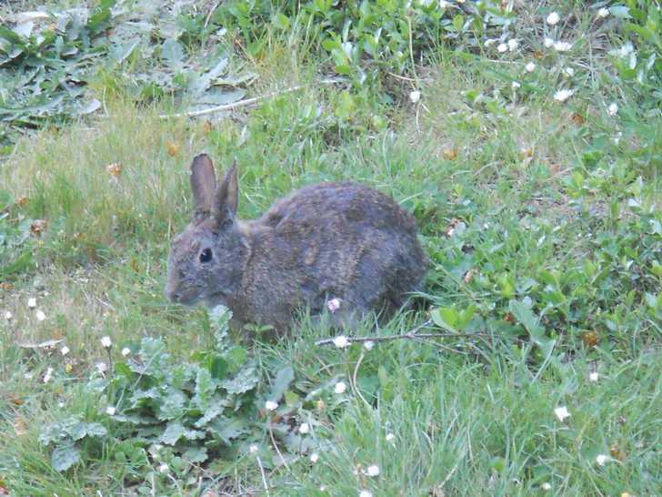 bunny112119.JPG