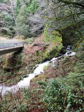 Humbug-_Fern_Trail-_Dry_Run_Creek__(5)095104.JPG
