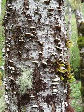 Humbug-Fungi__lichen___moss095904.jpg