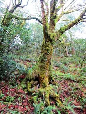 Humbug_Tree095418.JPG