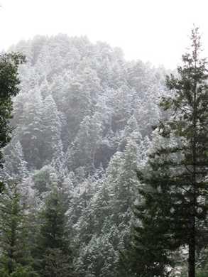 Humbug_snow095546.jpg