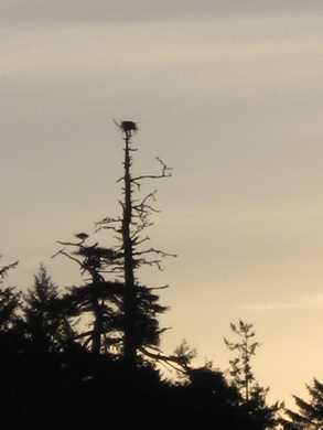 Nest_silhouette_Arizona_Beach_SRS014454.JPG