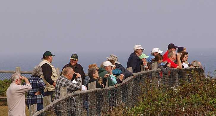 whale watchers .jpg