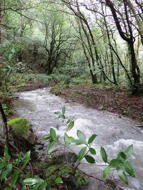 Humbug-_Fern_Trail-_Dry_Run_Creek__(2)094942.JPG
