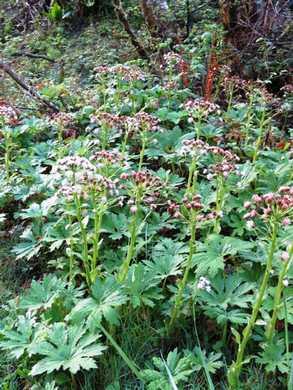 Humbg-Wildflower_(2)095811.JPG