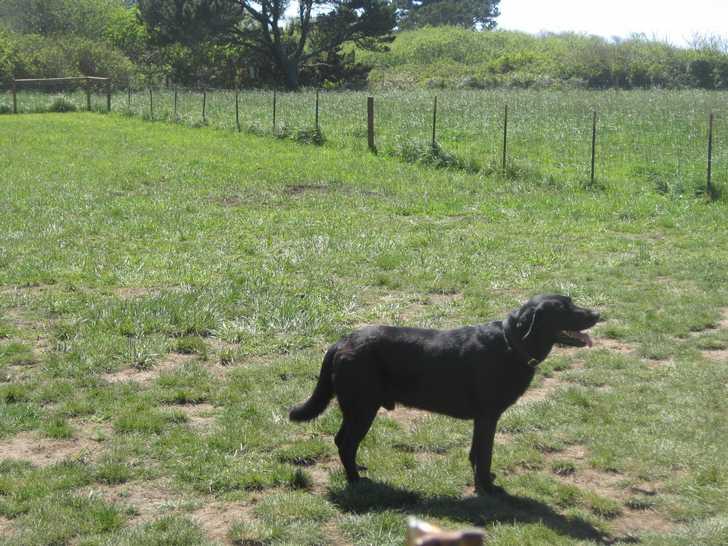 Mcvay_dog_park_lab054616.JPG