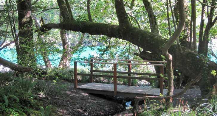 loeb_bridge083425.jpg