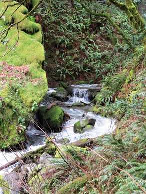 Humbug-_Fern_Trail-_Dry_Run_Creek__(4)095051.JPG