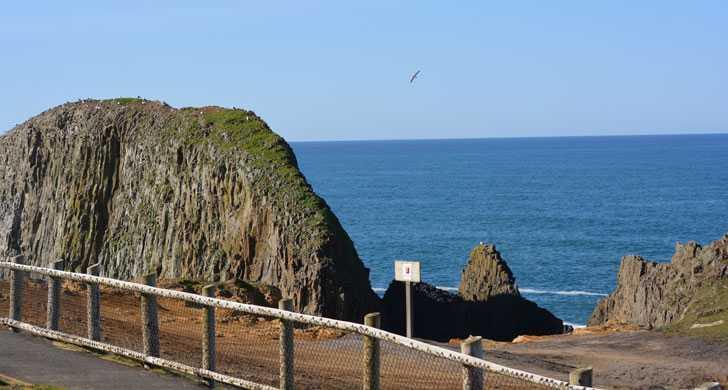 Seal-Rock-1113101.jpg