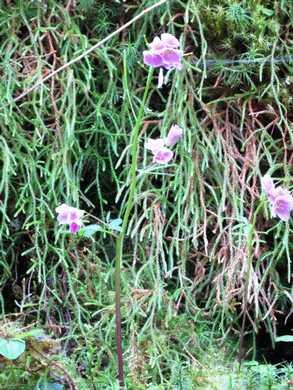 Humbg-Wildflower_(1)095813.JPG
