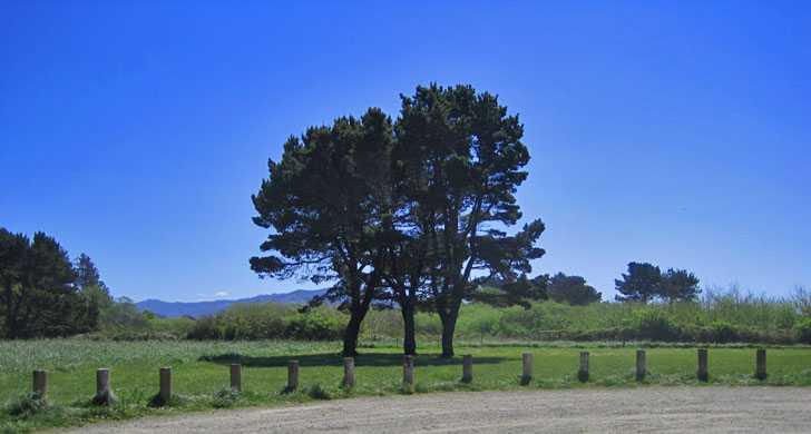 mcvay_trees103639.jpg