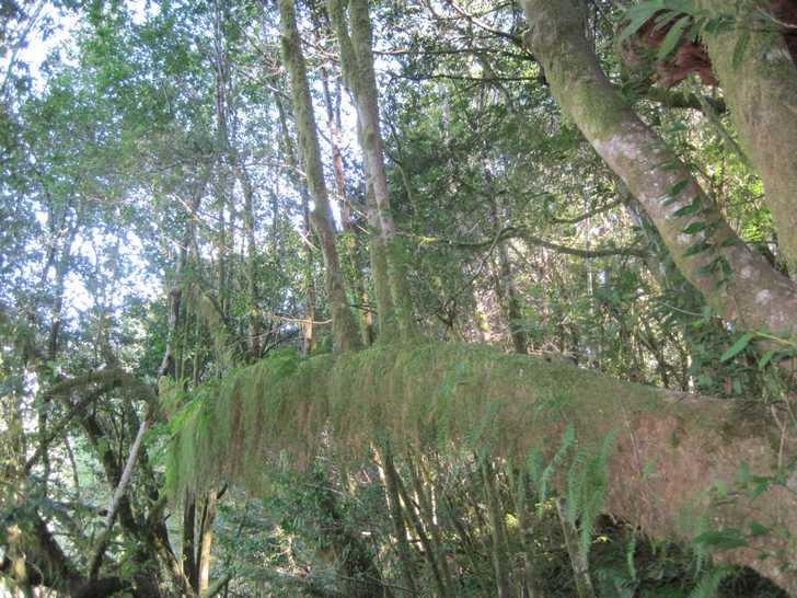 Loeb_nursery_trees045736.JPG