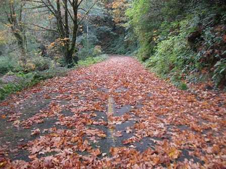 Humbug_-_Fern_Trail_-__In_Autumn_(1)093917.JPG
