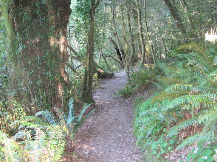 Loeb_Riverview_Trail045625.JPG