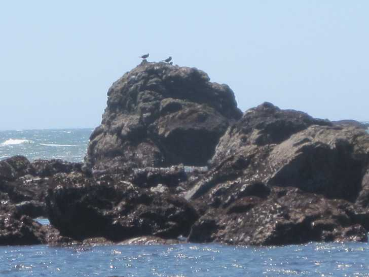 McVay_birds_on_rock_closer054134.JPG