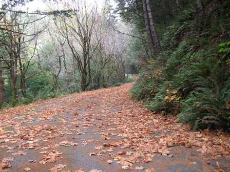 Humbug_-_Fern_Trail_-__In_Autumn_(2)093932.jpg