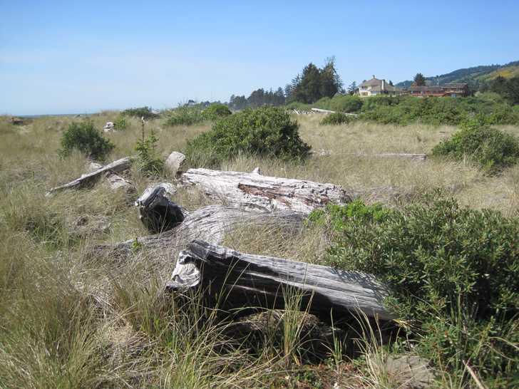 Crissey__driftwood054411.JPG
