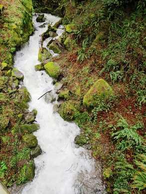 Humbug-_Fern_Trail-_Dry_Run_Creek__(3)094959.JPG