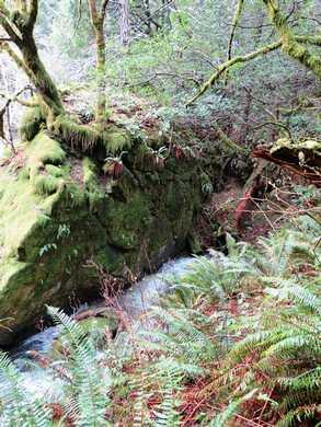 Humbug-_Fern_Trail_(1)094732.JPG