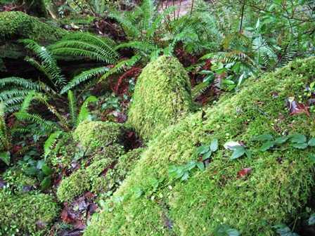Humbug-_Fern_trail-_Moss___Ferns095119.jpg