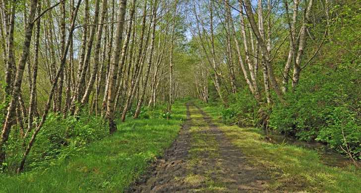 BeaverCreekTrail11x14.jpg