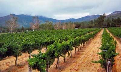 Longsword Vineyard image