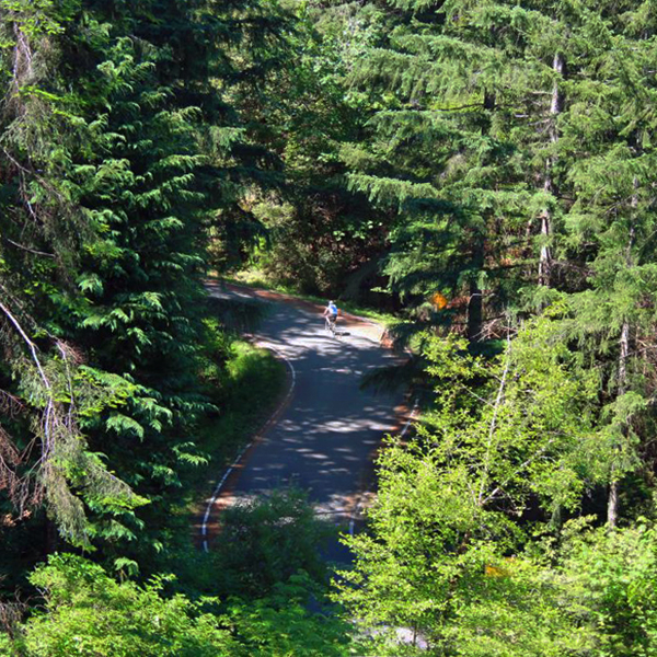 cyclist on winding road surrounded by evergreen trees