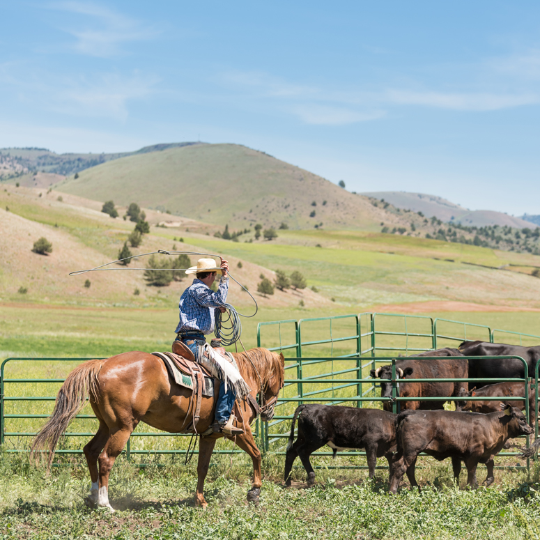 Enjoy an authentic ranch vacation