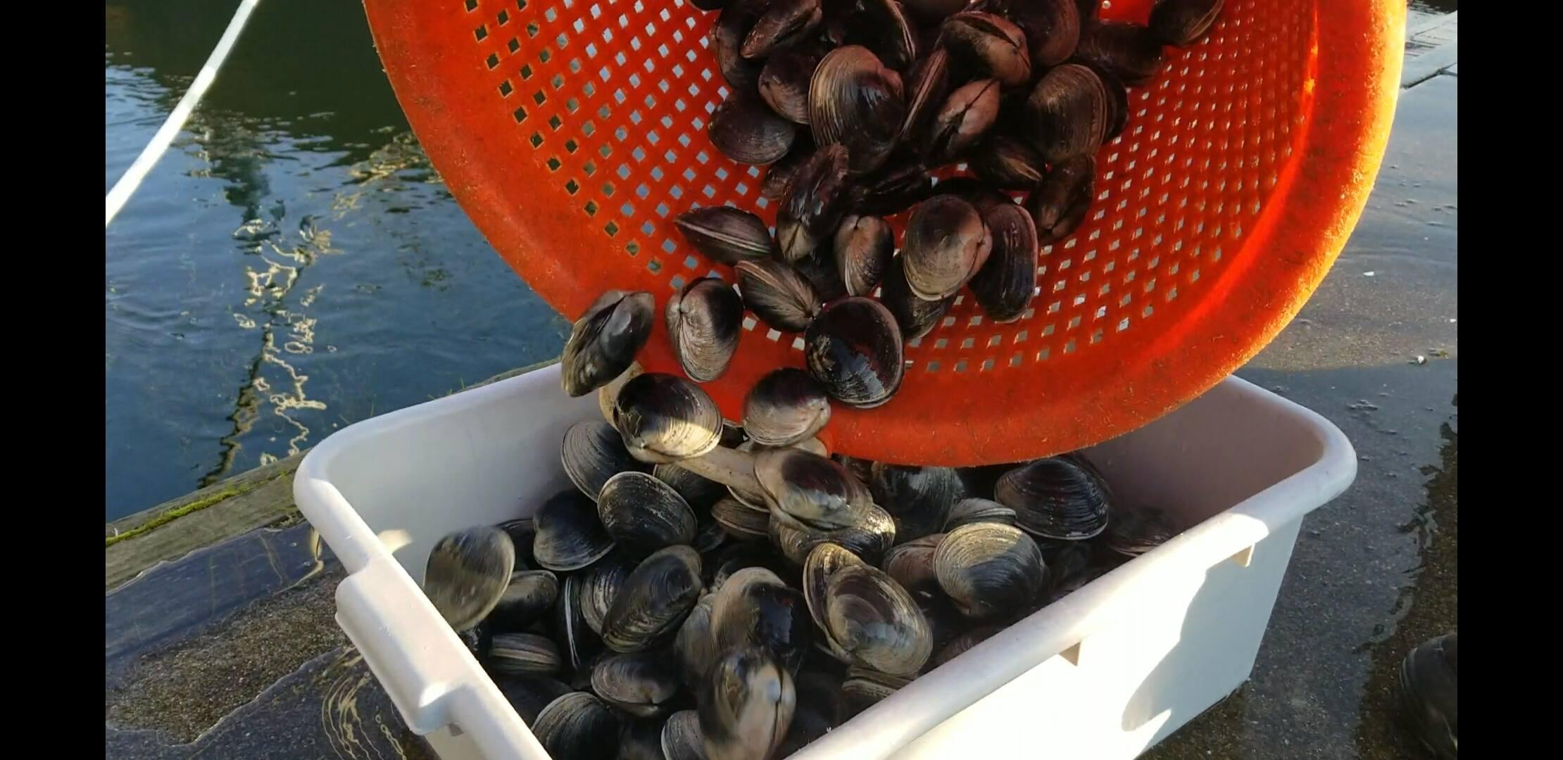 Fishermen's coos bay.jpg