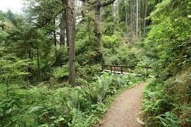 Siuslaw National Forest.jpg