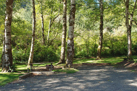 Kilchis River County Campground.jpg