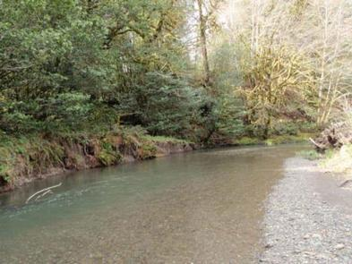 Edson Creek.jpg