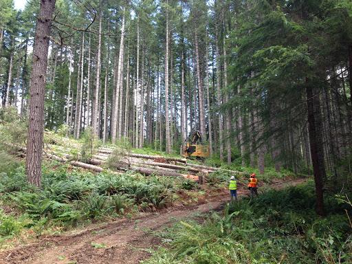 Starker Forestry Tour.jpg