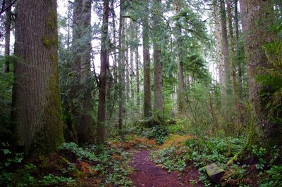 Clatsop State Forest.jpg
