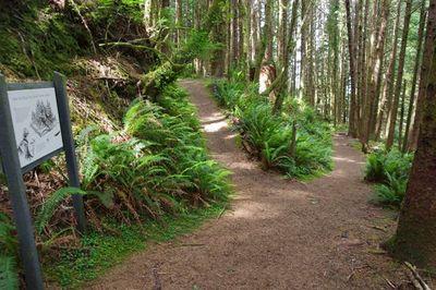 Cooks Ridge Trail.jpg