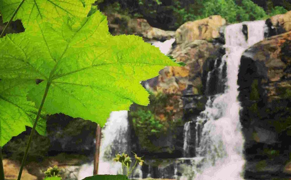 Coquille River Falls Trail.jpg