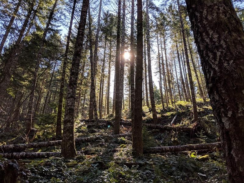 Tillamook State Forest.jpg