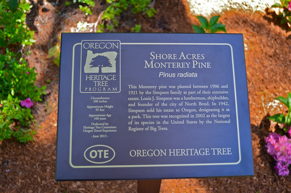 Shore Acres Monterey Pine - Heritage Tree.jpg