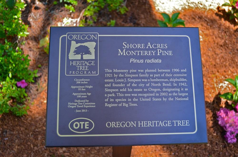 Shore Acres Monterey Pine - Heritage Tree.jpg