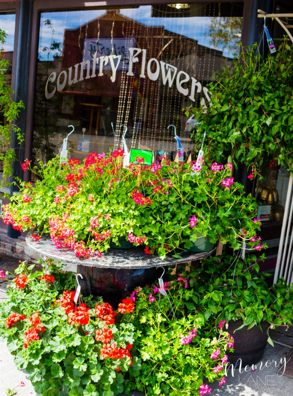 Country Flowers in Condon