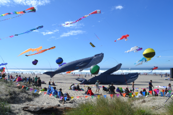 LincolnCity-Fall Kite-whale fleet.JPG