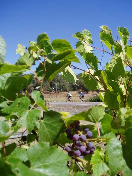 Vineyard Tour, Roseburg Oregon