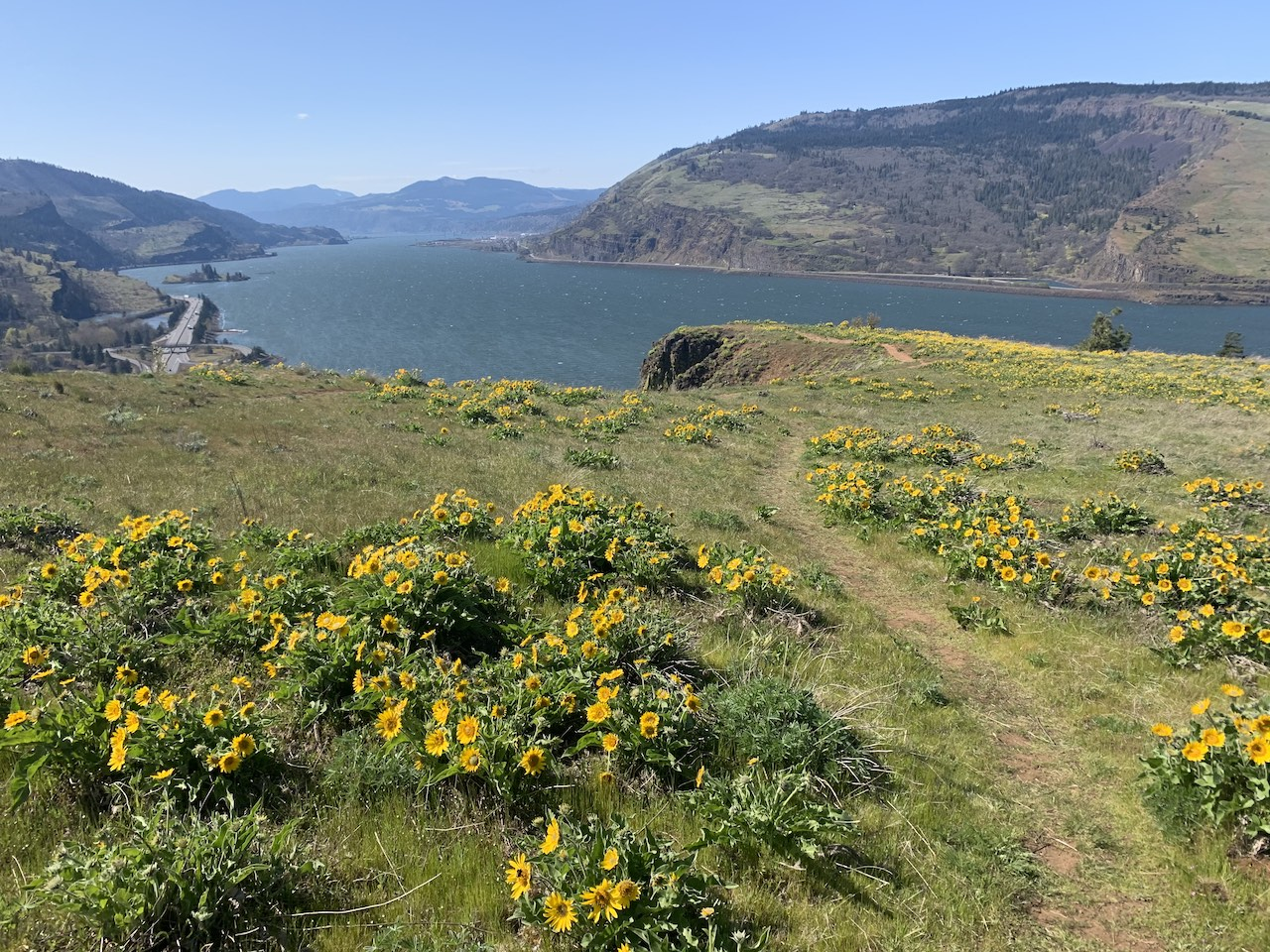 Long view of the gorge with yellow flowers